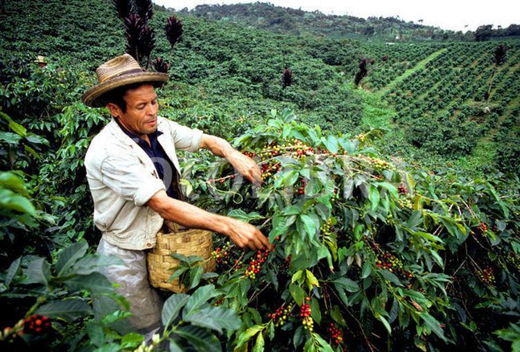 kavegep-berles-rendezvenyre-costa-rica